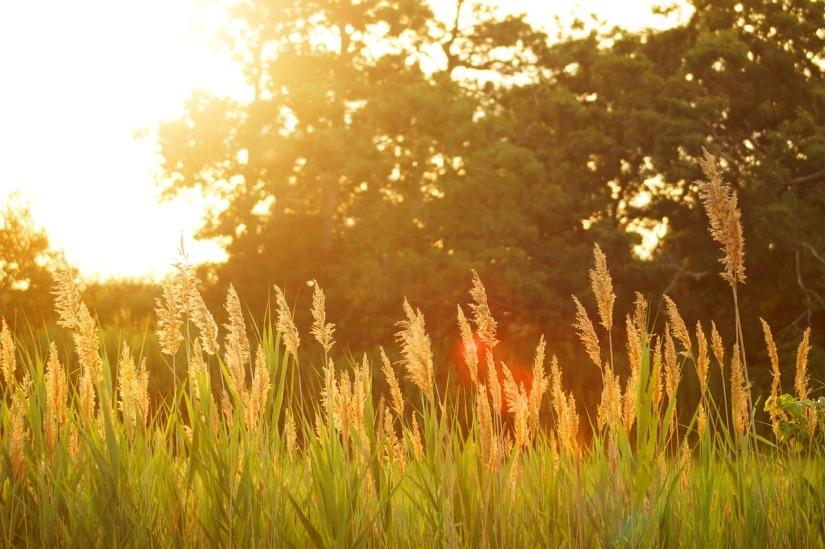 sunset-691682_1280