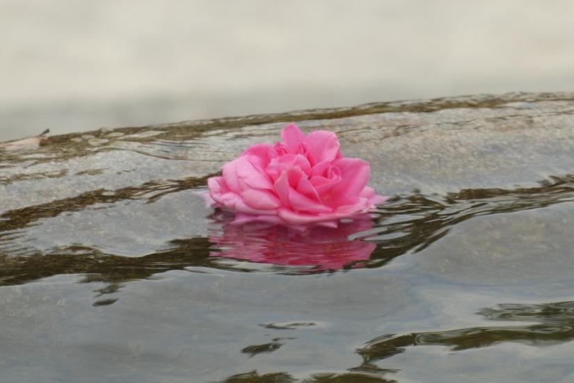 rose-3859934_1280