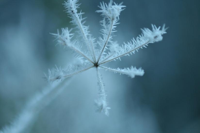 frozen-1169971-1279x850
